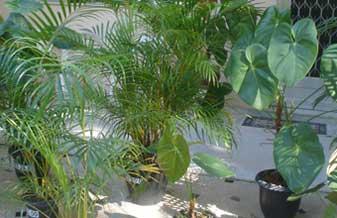 Plantas & Cia
